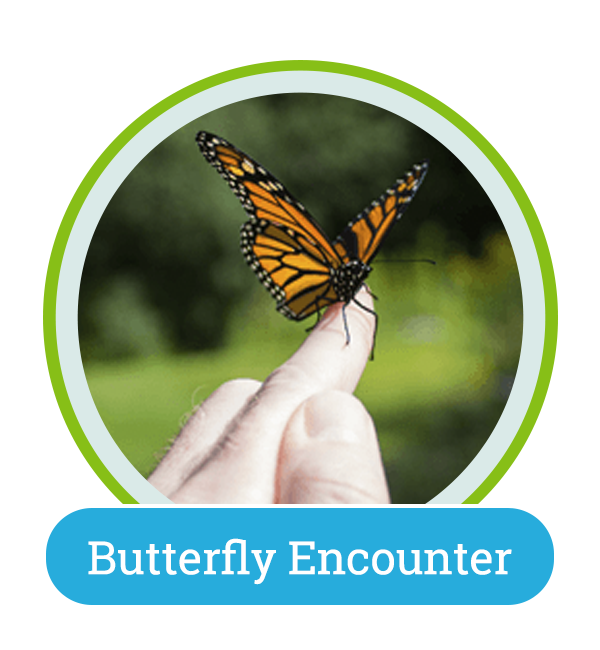 butterfly home circle button