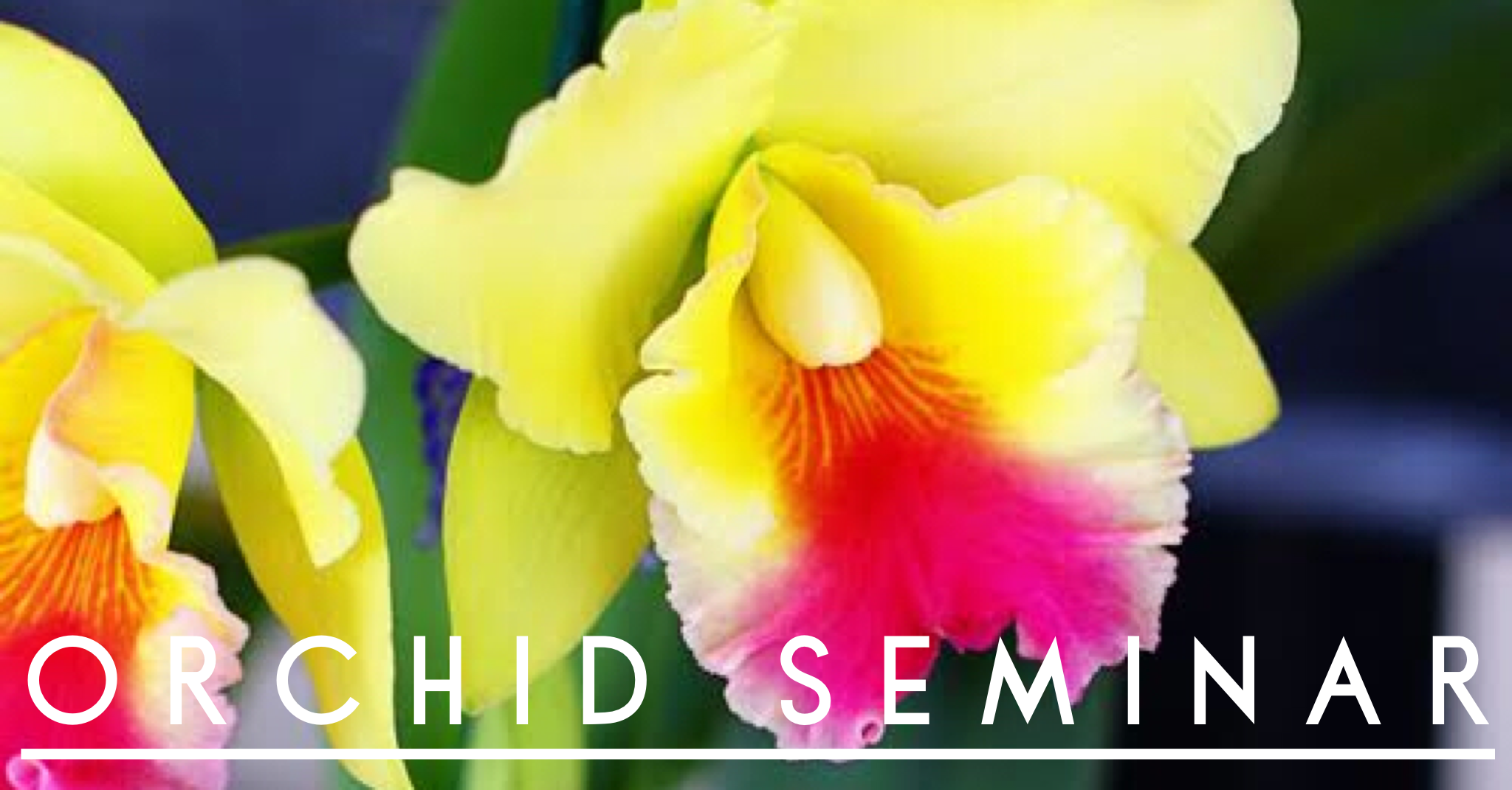 Orchid Seminar Yellow
