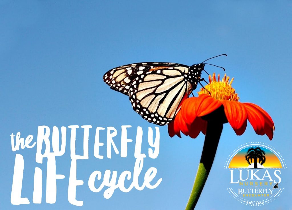 Virtual Field Trip: The Butterfly Life Cycle