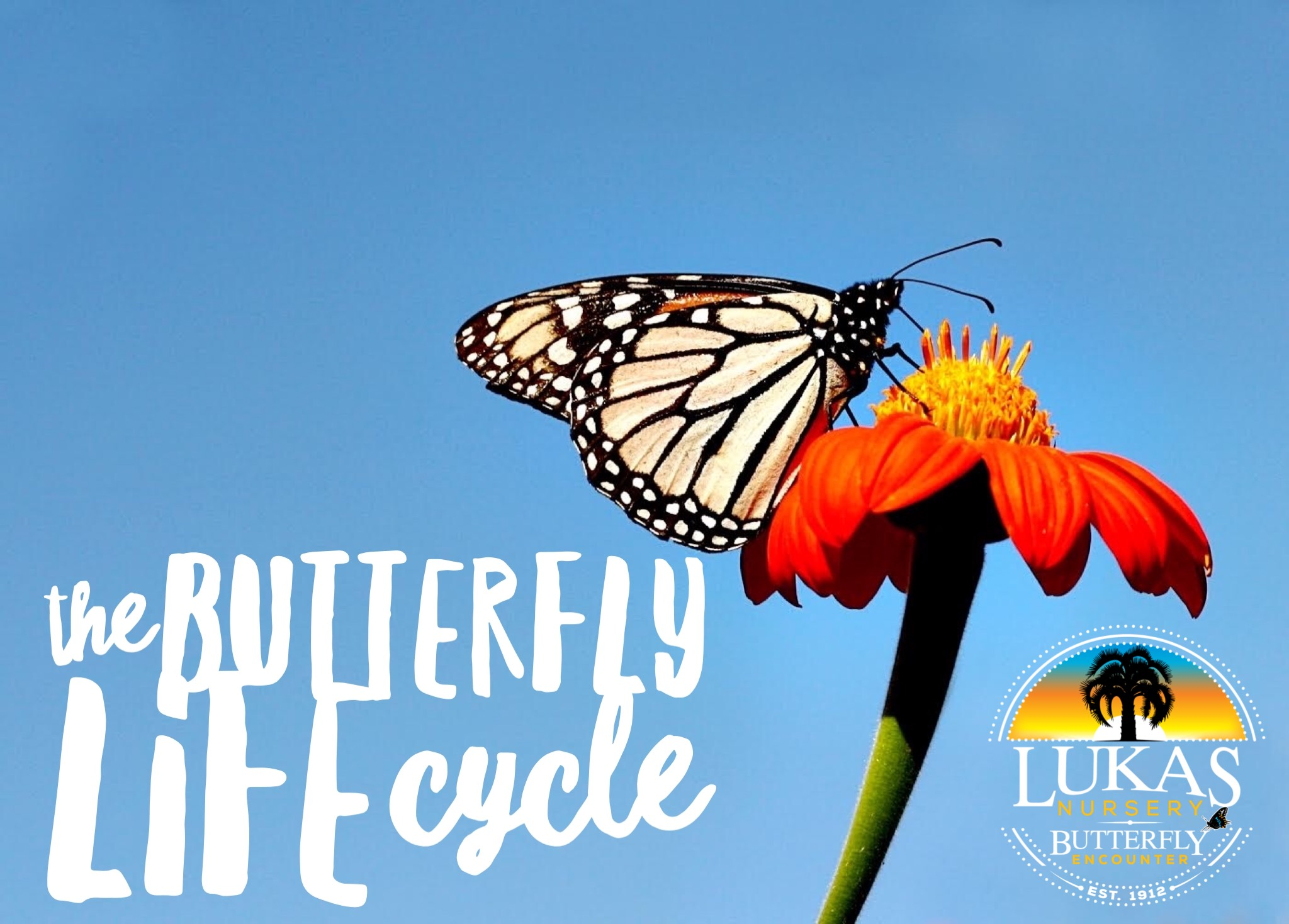 Virtual Field Trip Butterfly Life Cycle