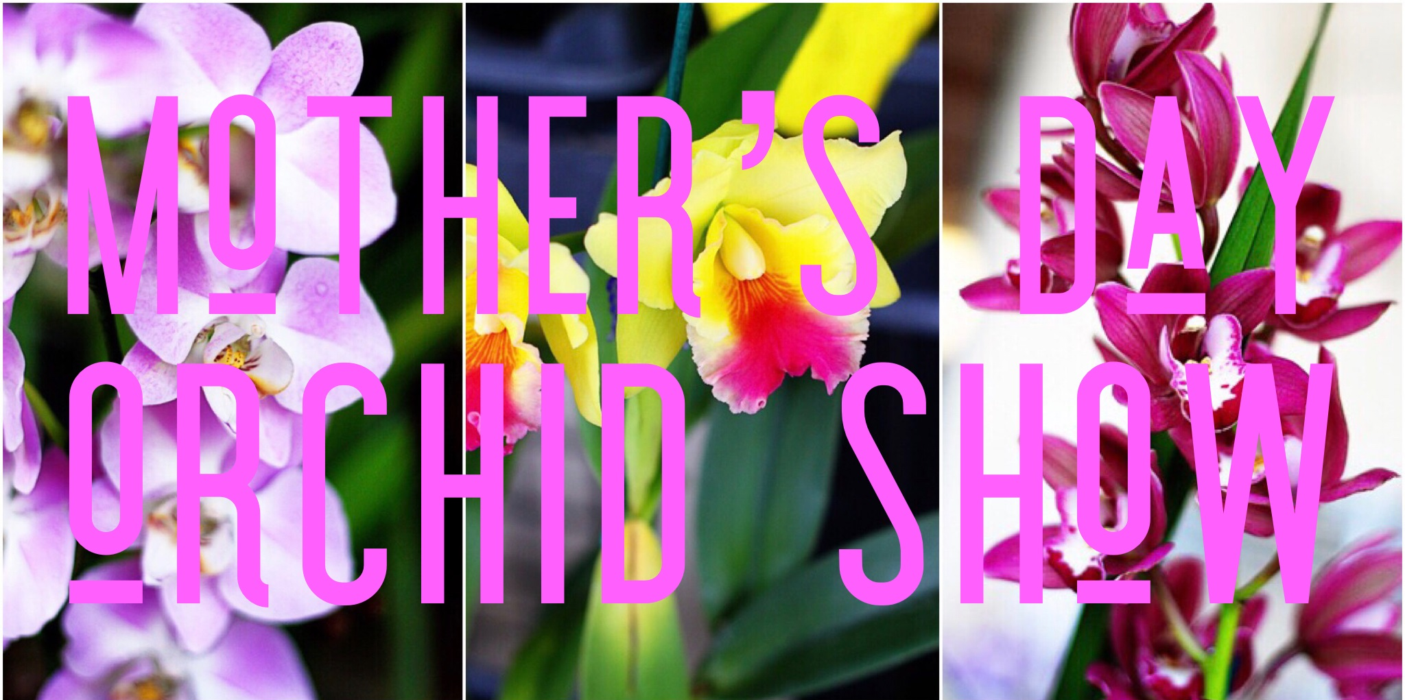 Mother's Day Orchid Show